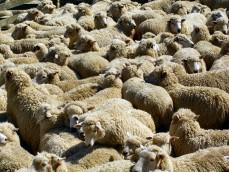 Приказка за лъжливото овчарче